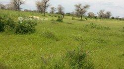 Vente Terrain agricole 19600 m² - Thiès