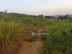 Terrain agricole  - Koume Giffo