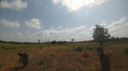 Terrain agricole 62 hectares - Notsè Batoume