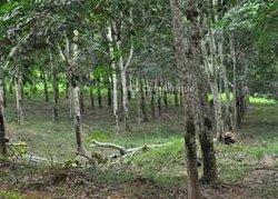 Vente Terrain agricole 34ha - Sikensi