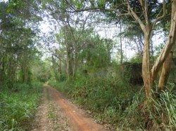 Vente Terrain agricole 3000ha - Sikensi