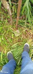 Vente Terrain agricole 600m² Songon Diapoté