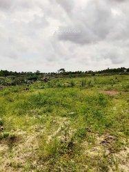 Terrains agricoles 190 ha - Grand Bassam