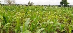 Terrains agricoles 500 ha - Tsevie