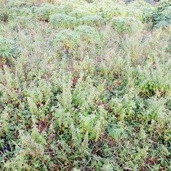 Terrains agricoles - Ouidah