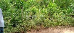 Location terrain 2 ha  - Anyama-
