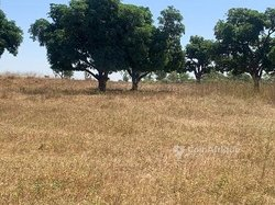 Verger 15 hectares - Diamagueune
