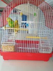 Oiseaux de maison
