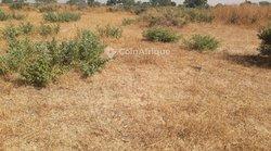 Verger 02 hectares - Niakhip
