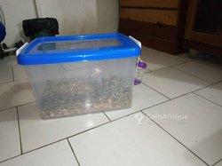 Vivarium pour hamsters