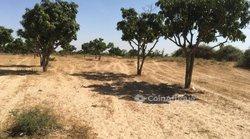 Verger 1,7 hectare - Ngadiaga