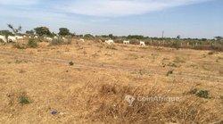Verger 2,4 hectares - Ngadiaga