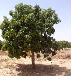 Verger 1,11 hectare - Tassette