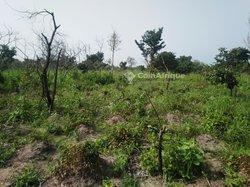 Terrain agricole - Parakou