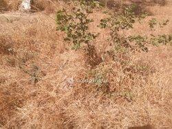 Vente terrain 1 ha - Saaba