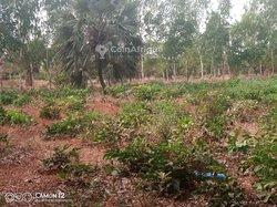 Terrain  4 hectares - Bobo Orodara