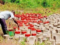 Terrains agricoles 300  m2 - Yamoussoukro