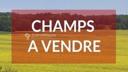 Vente champ 2 ha  - Bayakh