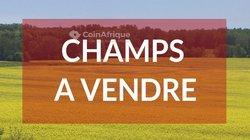 Champs 3 ha - Keur Mousse