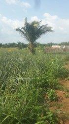 Vente Terrains agricoles - Sedje