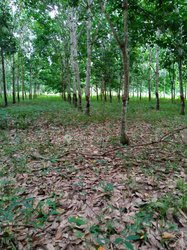 Terrains agricoles 52 hectares  - Agboville