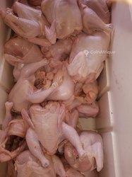 Poulets de chairs