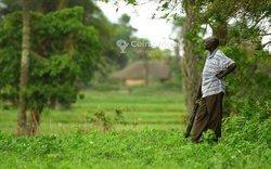 Vente Terrains agricoles 200 hectares - Agbelouve