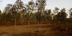 Terrain 2 ha 58  - Loumbila