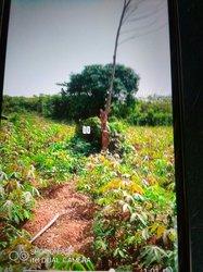 Terrain agricole 350 ha - Sikensi