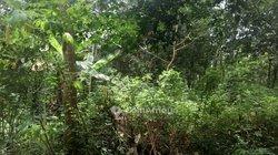 Terrain agricole 350 m2 - Sikinsi