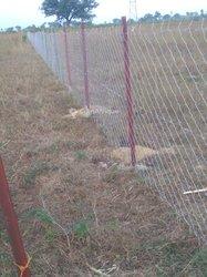 Grillages de clôture