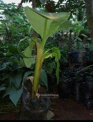 Terrains agricoles  - Lomé