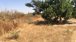 Verger  1,16 hectare - Keur Sara Badiane