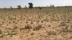 Terrains agricoles 20 hectares - Ngoudiane