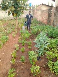 Terrain agricole - Sékou