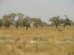 Vente terrains 10 ha - Komsilga