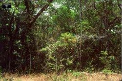 Terrains agricoles 10000 m2 - Anyama