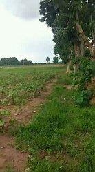 Terrain agricole 1 ha - Samanko