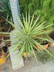 Plante de décoration