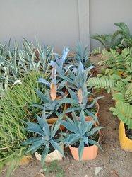 Plantes de jardin