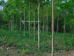 Vente plantation - Tamabo
