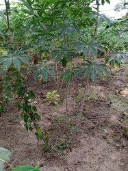 Vente Terrain Pisciculture et cacao culture 750m² - Azaguie