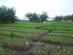 Terrain agricoles 3200 m2 - Riviera M'badon