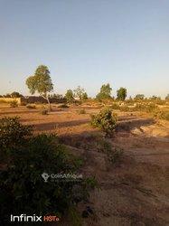 Cherche Terrain 2 hectares - Koubri