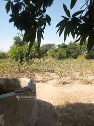Vente Verger 1ha - Keur Mor Ndiaye