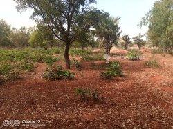 Vente Champ 4 hectares - Koumi