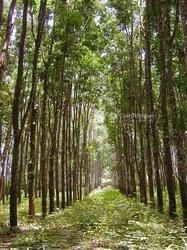 Terrains agricoles 75645 m² - Grand Lahou