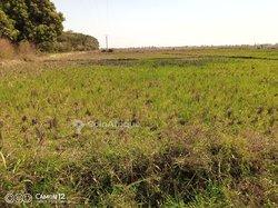 Terrains agricoles - Bama