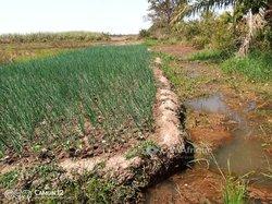 Terrains agricoles 6 ha - Bama
