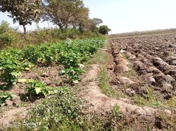 Champ  20 hectares - Moami